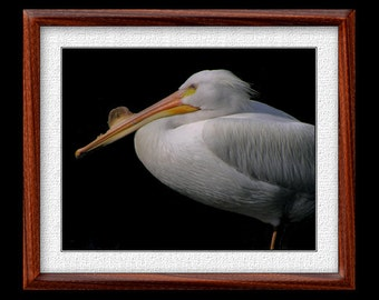 Pelican Print - 8x10 or 11x14 Pelican Photograph - Bird Photograph - Bird Print - Pelican Art - Nature Art - (P7)