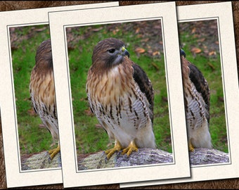 3 Hawk Greeting Cards Handmade - Blank Greeting Cards With Envelopes - Hawk Note Cards - Photo Note Cards Handmade Set - 5x7 Cards - (IN165)