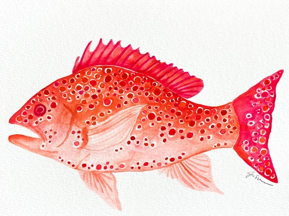 Red Snapper Watercolor