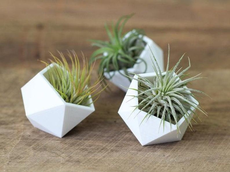 Geometric Air Plant Holders image 0
