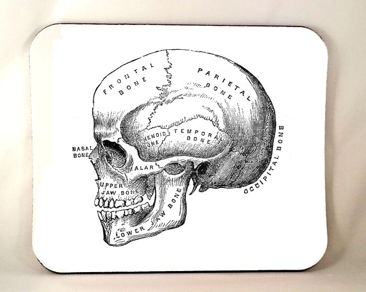 Anatomical Skull Mouse Pad Horror Mouse Pad Anatomy Vintage Etsy