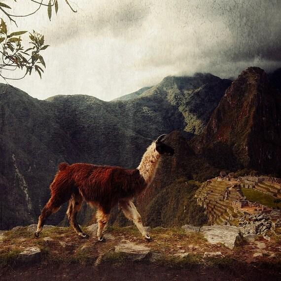 Alpaca Photo Machu Picchu Photo Printable Wall Art Rainy Machu Picchu Peru Photo Home Decor Digital Download Outdoor Photography art