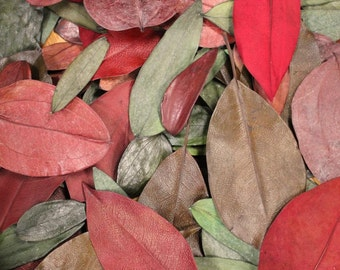 50 pc Assorted Preserved Pressed Dried Leaves Autumn Wedding Cottage Rustic Decor Botanical Wholesale Craft Leaf