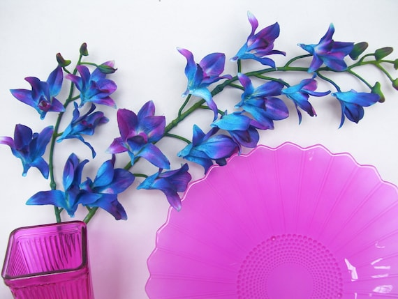 Special Order Blue Violet Mo Dendrobium Orchids Galaxy Orchids Etsy