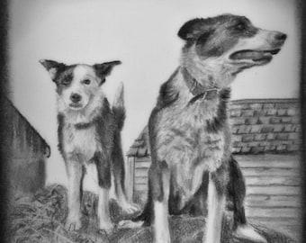Custom Pet Portrait Sketch, Custom Pet Portrait Drawing, Custom Dog Portrait, Pet Artwork, Pet Sketch, Dog Artwork, Custom Artwork