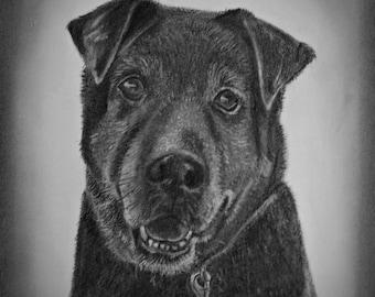 Dog Portrait Sketch, Custom Pet Portrait, Drawing from Photo, Custom Portrait Drawing, Dog Drawing, Dog Portrait Custom, Sketch from Photo