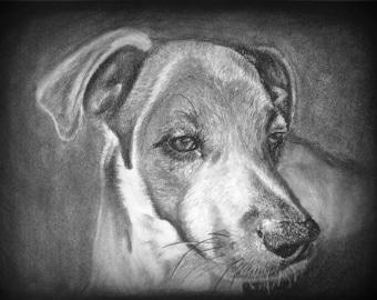 Custom Pet Portrait, Dog Portraits, Cat Portraits, Custom Dog Portrait, Pet Drawing, Animal Portrait, Pet Memorial, Pet Custom Drawing