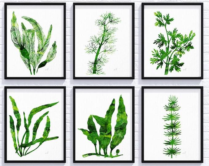 Sea Coral, Watercolor Seaweed, Set of 6 six, Botanical Prints, Green Emerald Wall Decor, Nautical Seaweed, Beach Wall Decor Bedroom Wall Art