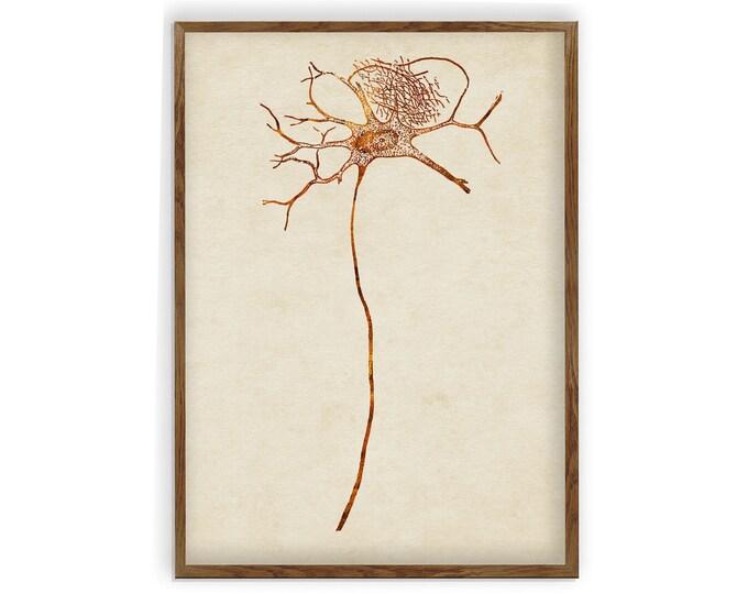 Neurons, Neuroscience Art, Nerve Cells, Types of Neurons, Biology Art, Neuron Art, Neurology Art, Neurologist Gift