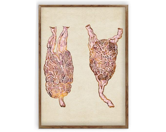 Lymph Nodes Anatomy, Medical Art, Tissue Spaces, Vintage Print, Medical Art, Graduation Gift, Office Décor