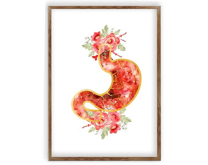 Medicine Art, Stomach Art, Stomach Anatomy Art, Doctor Office Art, Doctor Gift, Gastrointestinal Art, Digestive System