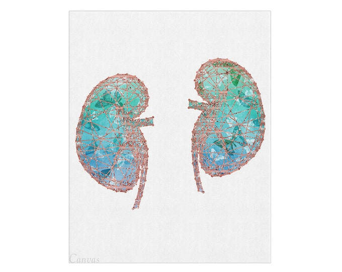 Human Kidneys Poster, Kidneys Anatomy, Watercolor Print, Urology Art, Medical Illustration, Clinic Wall Décor, Graduation Gift