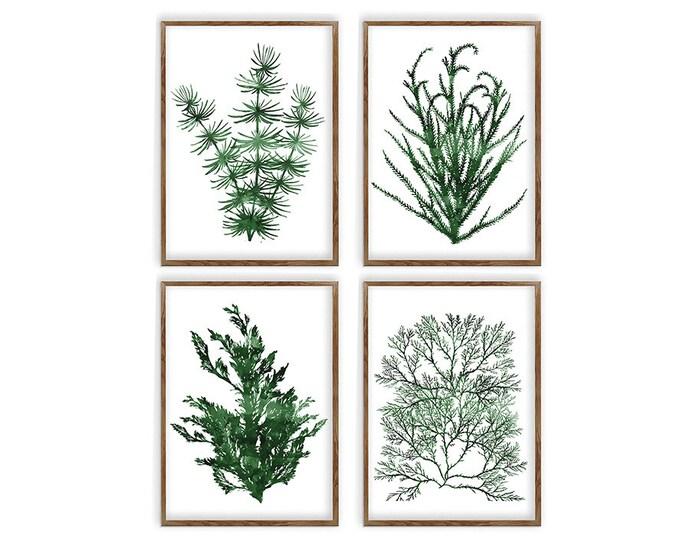 Seaweed Watercolor Painting, Coral Print Set Of 4, Wall Art, Nautical Art, Beach House Décor, Fern Canvas Print