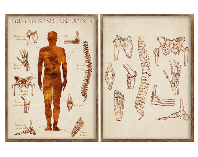Human Bones Anatomy, Bones Joints Art, Prints Set, Orthopedic Art Prints, Human Body Art, Anatomical Art, Anatomy Artworks, Gift for Doctor