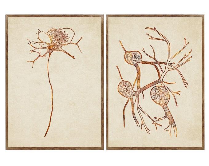 Set Of 2 Print, Biology Art, Nerve Cell, Types of Neurons, Neurons, Neuroscience, Nervous Tissue, Neurologist Gift, Neurologist Office Décor