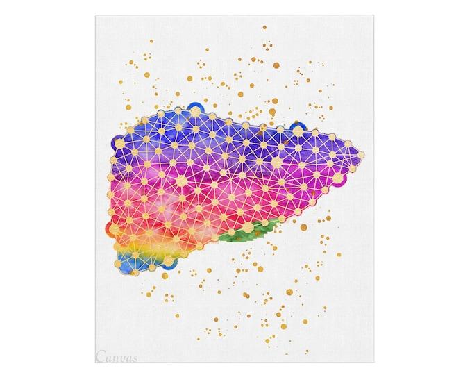 Liver Art, Human Liver,  Medical Art, Clinic Wall Art, Surgeon Gift, Med Office Décor