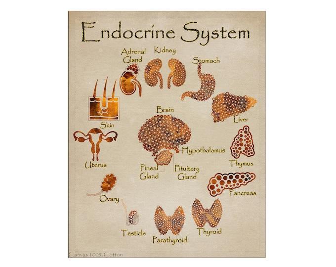Anatomical Endocrine System Art Print | Endocrine Art Prints | Human Body Art | Anatomical Art Print | Gift for Endocrinologist