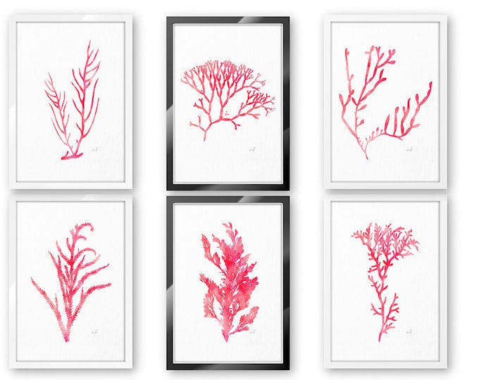 Pink Seaweed Print, Wall Art, Set of 6 Prints, Coastal Wall Décor, Beach Cottage Decor, Coastal Decor, Coral Posters, Canvas Wall Art