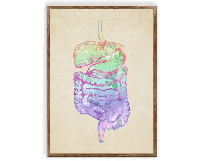 Digestive System, Anatomy Print, Human Organ, Gastrointestinal Clinic Décor, Student Graduation Gift, Medical Art