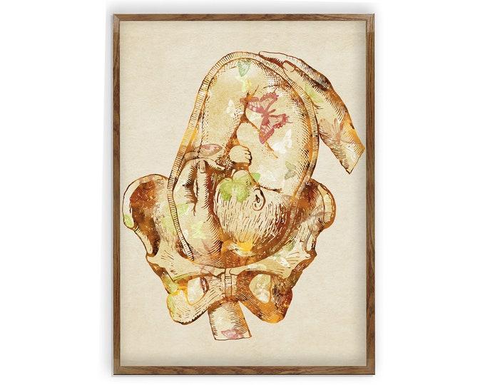 Vintage Inspired Gynecology Art Print | In Utero Art Print | Human Body Art | Gynecology Art | Family Practice Art | Gift for Gyno