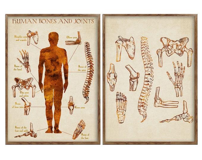 Human Bones Anatomy, Bones Joints Art, Prints Set, Wall Art, Orthopedic Art Prints, Anatomy Artworks, Gift for Doctor