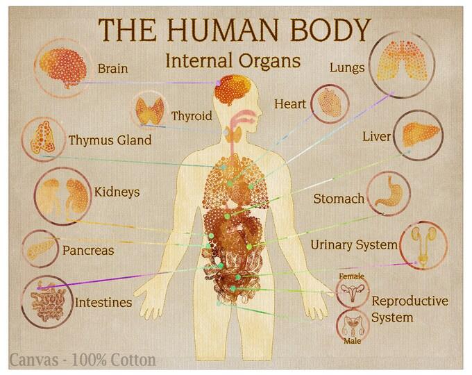 Human Body Anatomy Art, Medical Print, Human Organs Poster, Medical Wall Art, Medical Chart, Doctor Office Décor, Doctor Graduation Gift