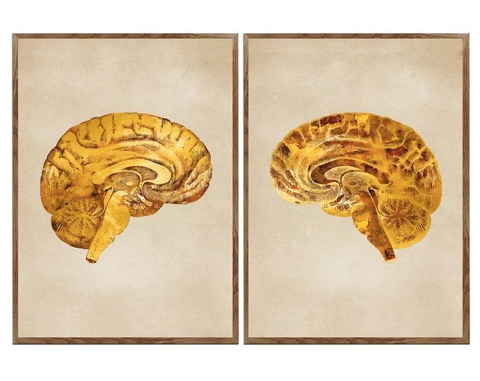Human Brain Art, Vintage Anatomy Poster, Medical Office Art, Set of 2 Prints, Medical Student, Brain Art