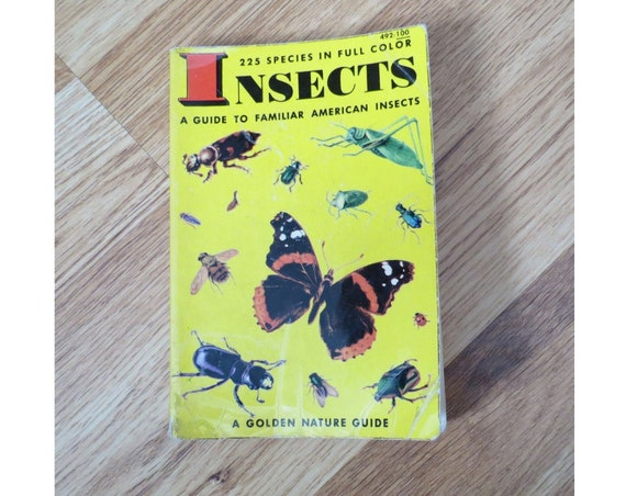 Insects Golden Guide / Nature Animal Handbook / Butterflies Bees / Classification Field Guide / Science Book / Entomology