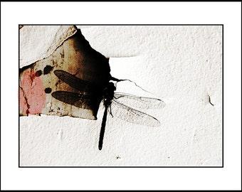 Digitaler Download Fotografie, Dragonfly Wandkunst, Dragonfly Fotografie, Sepia, Download Print, Sepia-Dekor, Dragonfly-Dekor