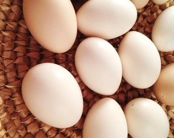 Eggs, One Dozen Bantam Chicken Eggs, Clean and Blown for Crafts, Pysanky, Home Decor