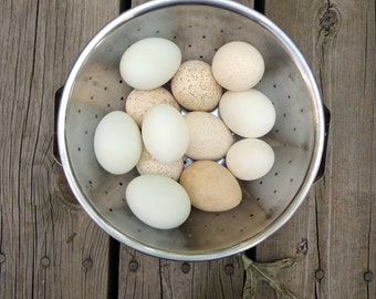 Eggs, 1 DOZEN  Mix of Turkey and Duck, Clean, Emptied Eggshells, Pysanky,Crafting, Carving, Decor