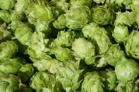 Fresh SIMCOE Leaf Hops For Making Home Brewed Craft Beer 1 oz Package