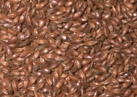 All Natural Raw DARK CHOCOLATE Brewers Malted Grain For Home Beer Brewing 1 Pound