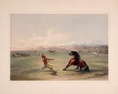 George Catlin 39 s North American Indian Portfolio quot Catching the Wild Horse quot (1844) - Giclee Fine Art Print