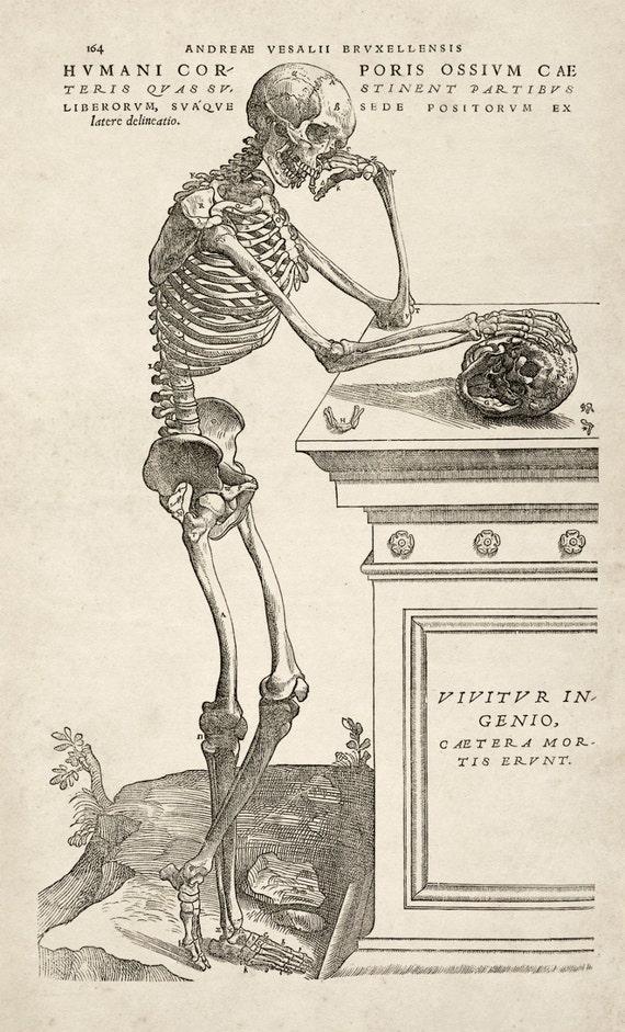 Andreas Vesalius Human Anatomy Print Skeleton Etsy