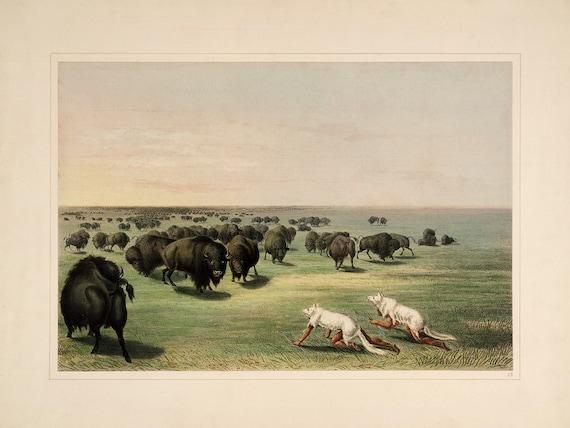 "/""Buffalo Hunt Catlin North American Indian Portfolio Chase/"" — Fine Art Print"