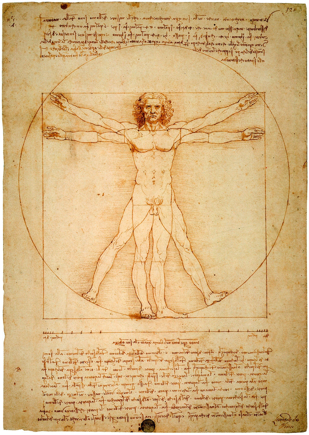 Leonardo da Vinci : Vitruvian Man (c1490) - Giclee Fine Art Print