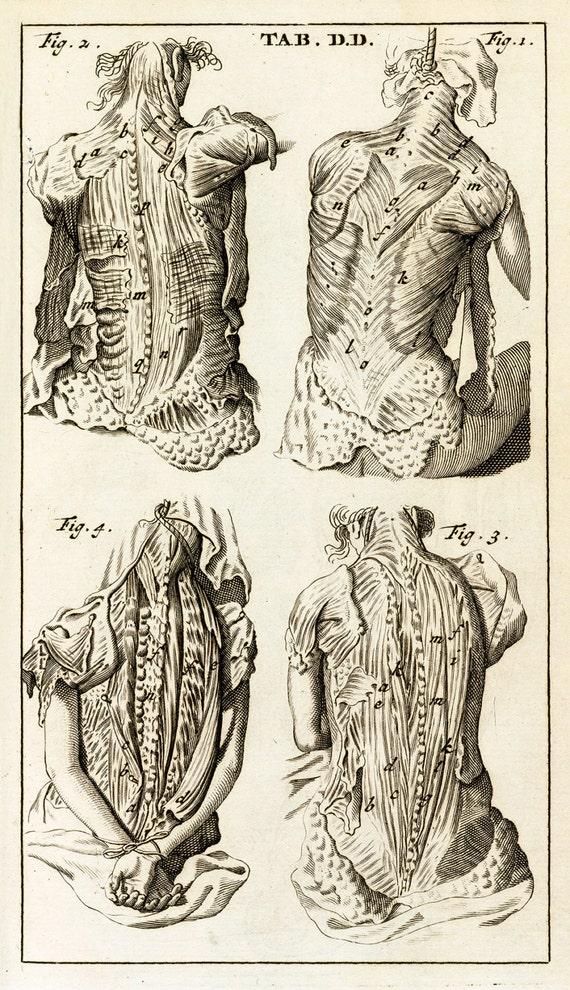 Steven Blankaart : Anatomia Reformata Tab DD Muscles | Etsy