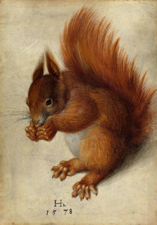 Hans Hoffmann nach Albrecht Dürer: Eichhörnchen   Etsy