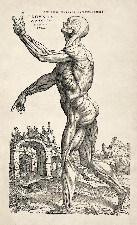 Andreas Vesalius Human Anatomy Print Muscle Man Etsy
