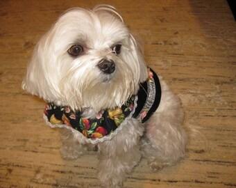 Doggy Klettergurt speziell für Noella