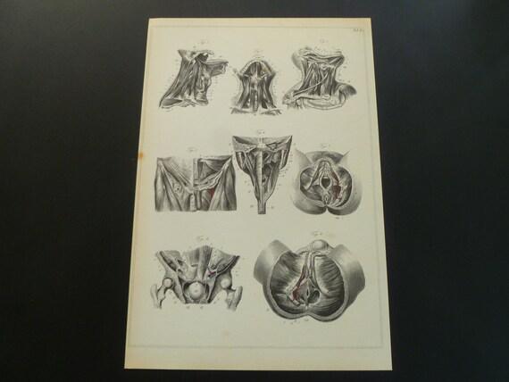 Alte Anatomie-Druck von Muskeln Vintage Bilder über Muskel | Etsy