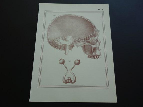 Alte Anatomie Druck Druck Augen wieder antike anatomische