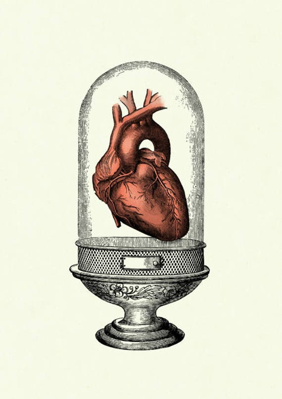 Anatomisches Herz Druck Glasdom Anatomie Liebe Kunstdruck   Etsy