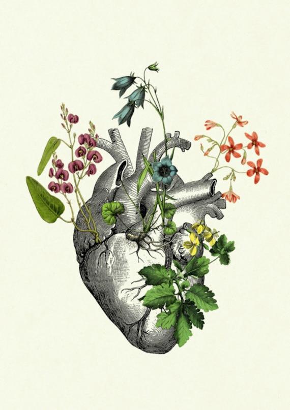 Herz Kunstdruck Anatomie Blumen I Botanik Liebe Steampunk   Etsy