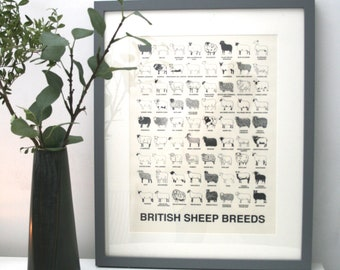 British sheep breeds print