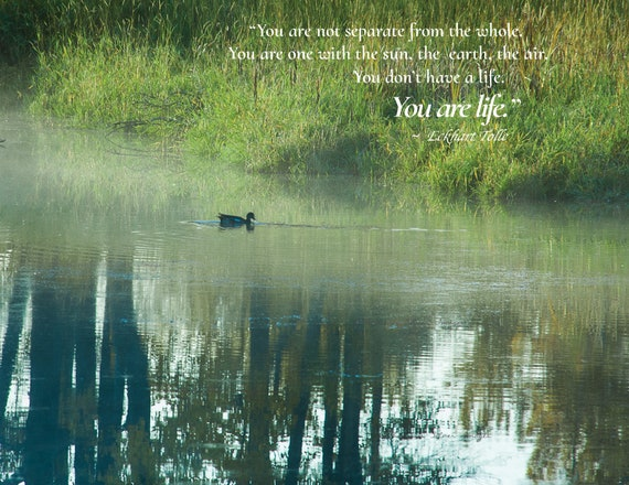 You are Life-Misty Morning Spring Pond with a duck