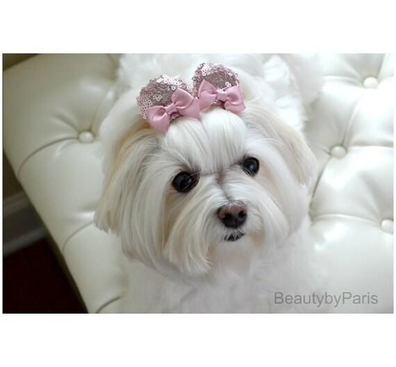 Maltese Puppy Dog Pinwheel Hair Bow White or Pink