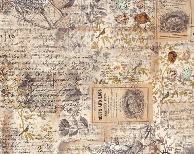 Free Spirit Tim Holtz - Wallflower- Eggs & Nest Bird Writing Fabric PWTH031 BTY