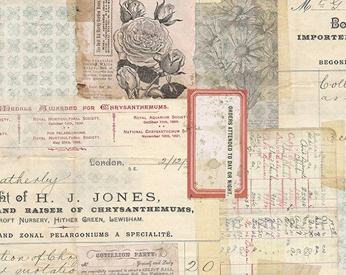 Free Spirit Tim Holtz - Memoranda - Chrysanthemum Floral Pink Beige Card Letter Fabric PWTH093 BTY